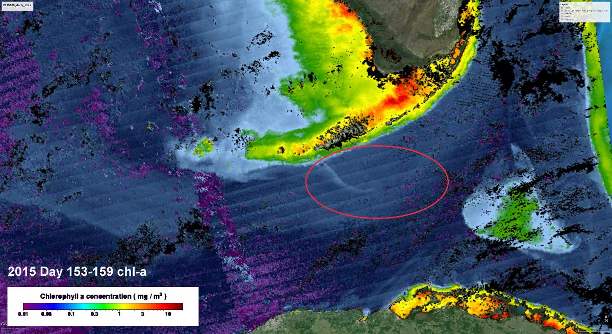 Straits of Florida VIIR chlorophyll a image