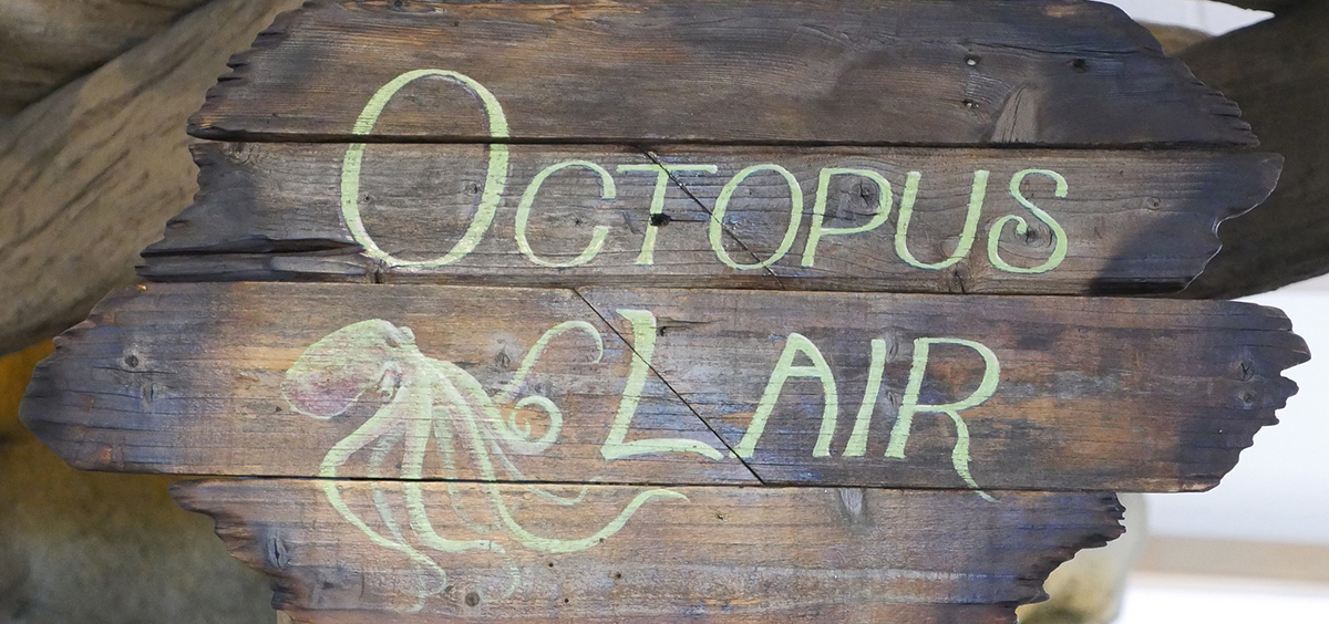 "A sign directing visitors to the ""Octopus Lair"" at the HMSC Visitor Center"