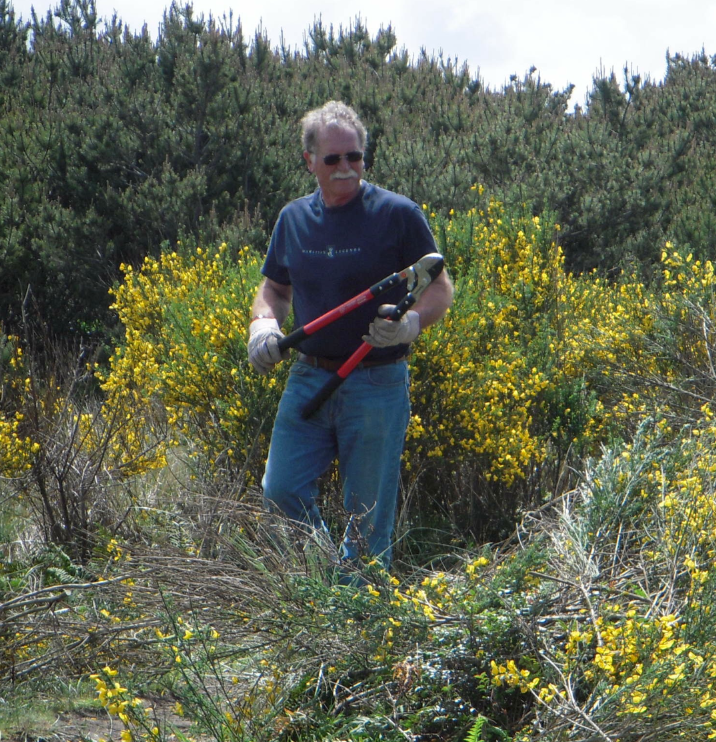 GWB with Scotch broom