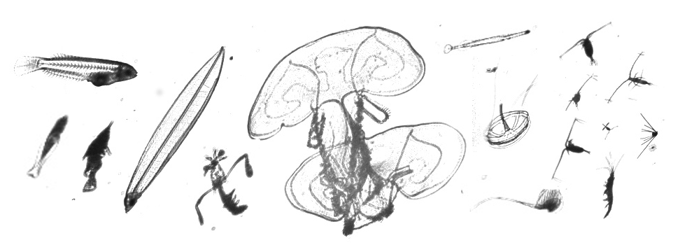 OSTRICH_Plankton