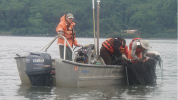 EPA scientists in a boat on a bay use trawl seine nets to measure if the effects of eelgrass affect junvenile crab populations.