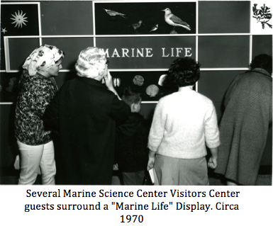 "Several Marine Science Center Visitors Center guests surround a ""MARINE LIFE"" display. In wall-mounted display include several stuffed sea birds, sea stars, shells and kelp. Black & white."
