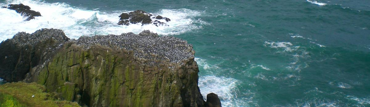 Birds on Clifftop