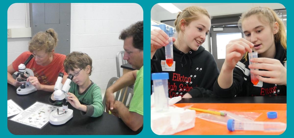 Family looking at plankton in microscope and two high schoolers examining strawberry DNA in beakers.