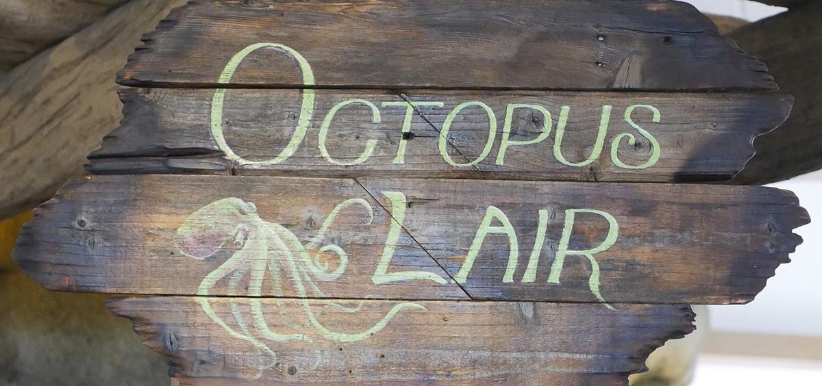 """A sign directing visitors to the """"Octopus Lair"""" at the HMSC Visitor Center"""