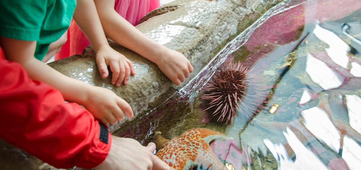 Tidepool Touch Tank