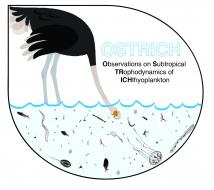 Ostrich Project logo