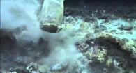 The ROV uses a scoop net to collect mussels at Niua North