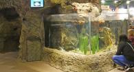 Large aquarium tank at the HMSC Visitor Center