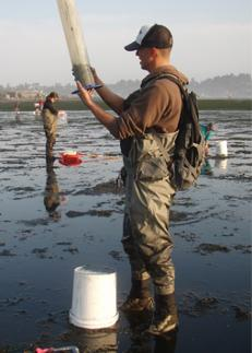 A scientist dressed in wadders stands in a tidalflat