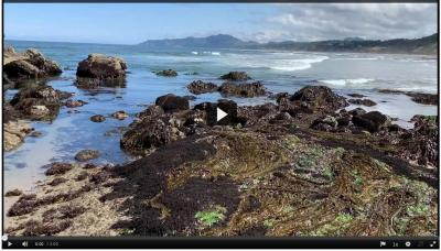A video image of a rocky tide pool off the Oregon coast.