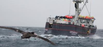 seabirds flyinig close to research boat