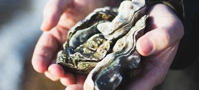 hands holding oysters in the shell.
