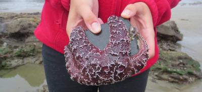 Hands holding a rock with a sea star clinging to it.