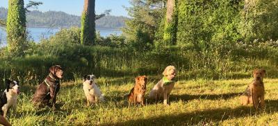 dogs in a medow