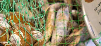 A net filled with razor clams