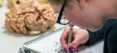 student draws marine life