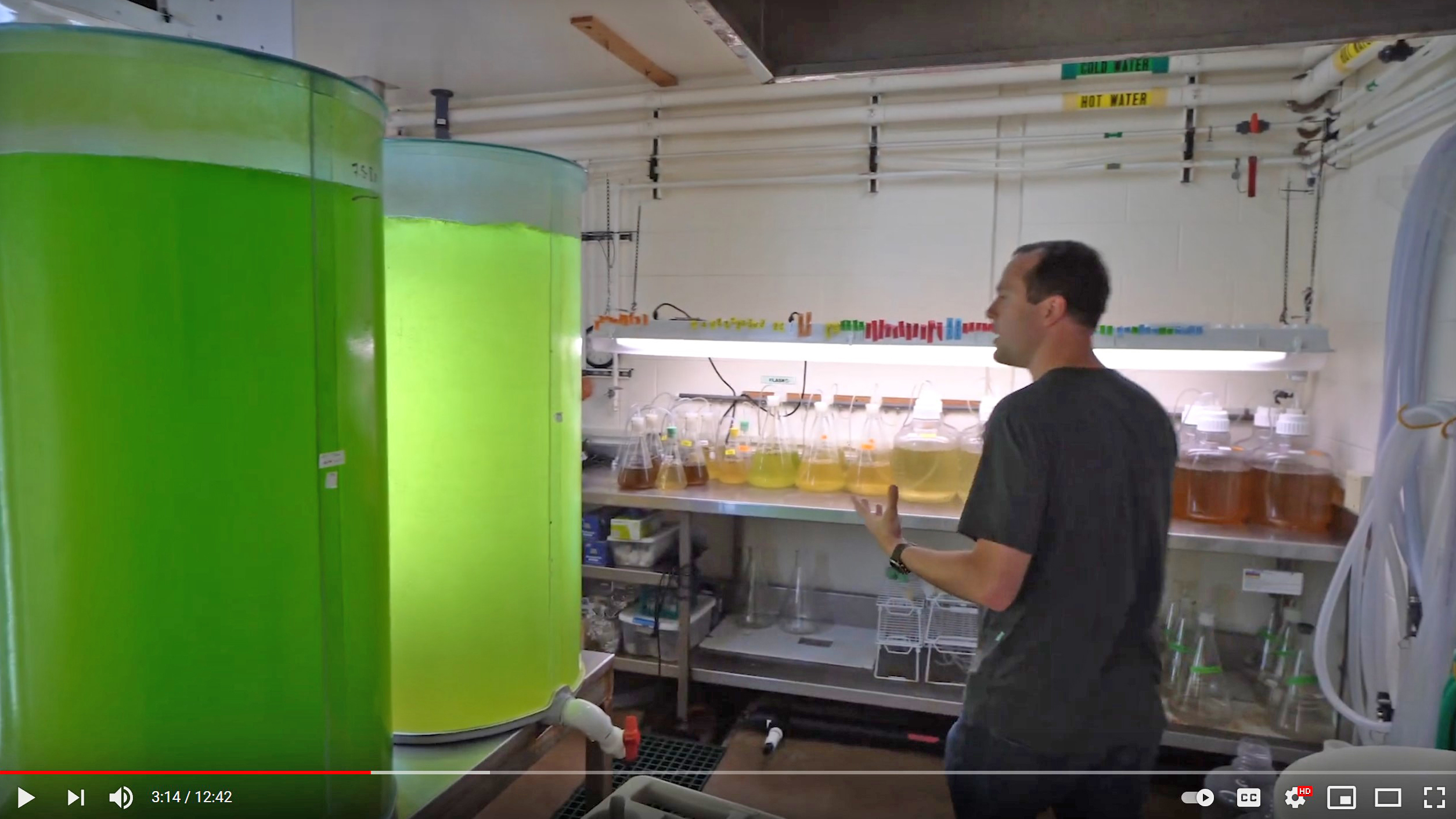 Researcher stands in an aquaculture lab by two large tanks full of bright green algea.