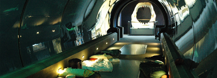 Sleeping with the Sharks at Oregon Coast Aquarium