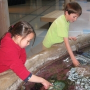 Students at touch tank