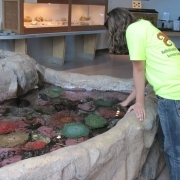 Gently touch the tidepool animals