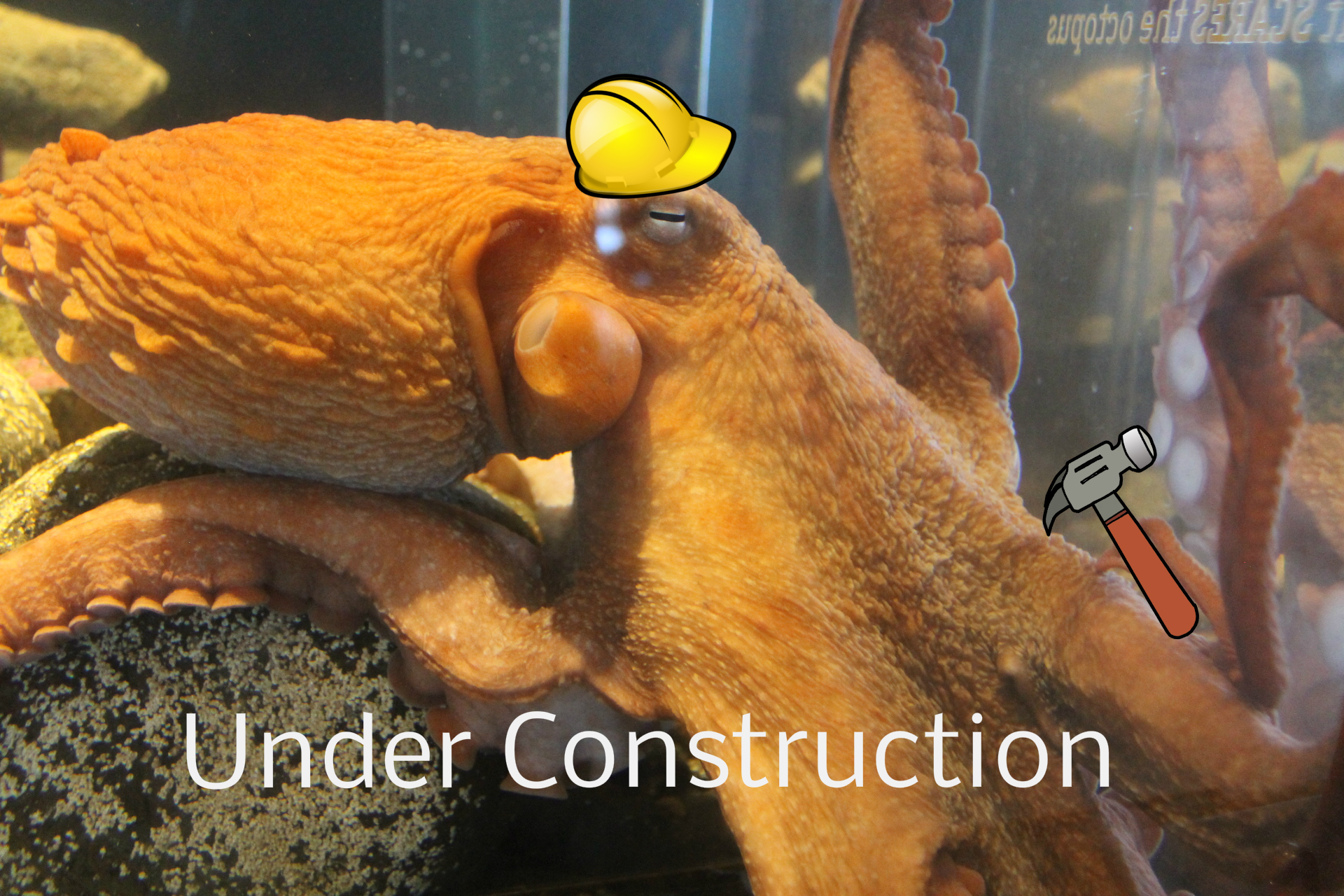 Under Construction - Octopus wearing hard hat and weilding a hammer.